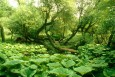 Alluvial forest at the Elbe  (© BSU)